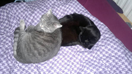 zino and pino - cat stock by Ymia-the-cheetah