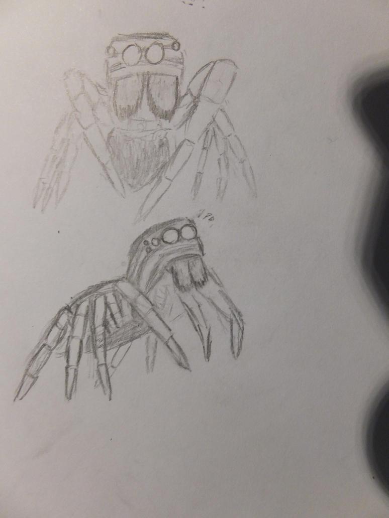 Jumping Spider (Salticidae) by StryfeCerulean