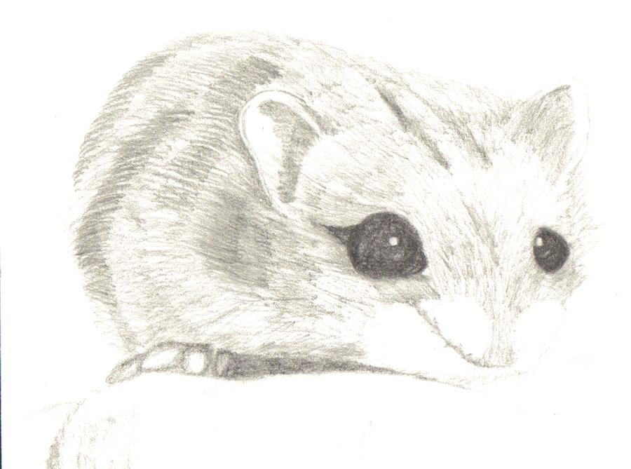 dwarf hamster by generalbrievous