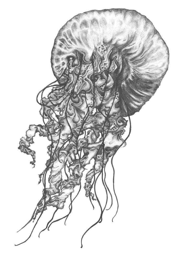 Jellyfish Realistic Drawing  Jellyfish Reali...