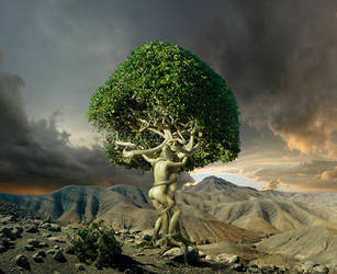 Tree of Love by HansPeterKolb