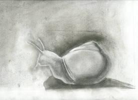 Snail by Ccandy