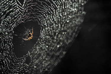 Spiderweb of hearts. by Jiskah