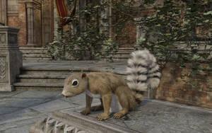 Squirrel D1