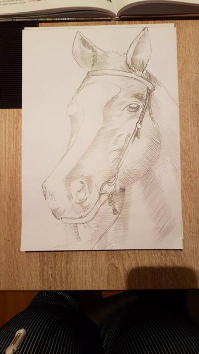 Horse draw by Derskat