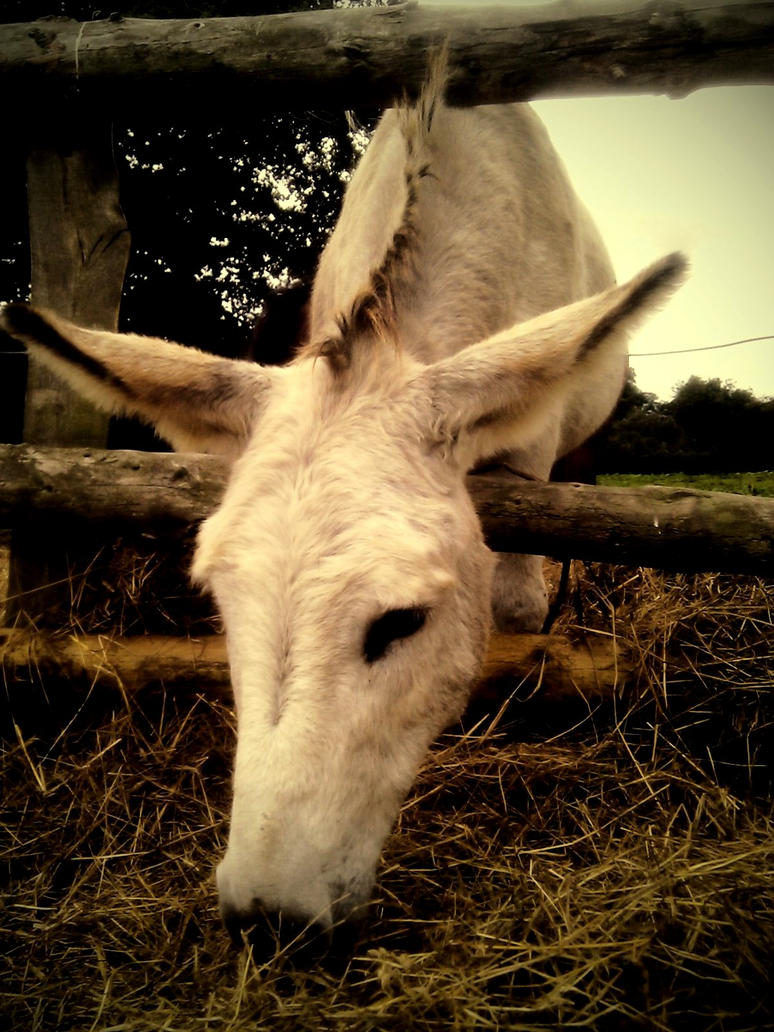 donkey__by_hanaatthedisco-d2yigp9.jpg