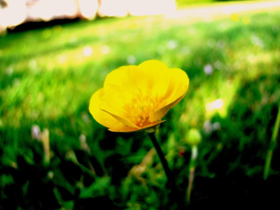 Buttercup by HaanaArt
