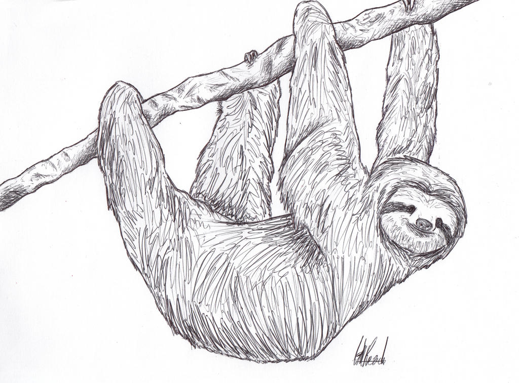 Sloth by HaanaArt