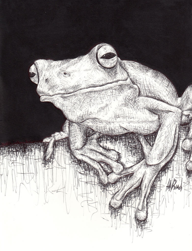 Frog by HaanaArt