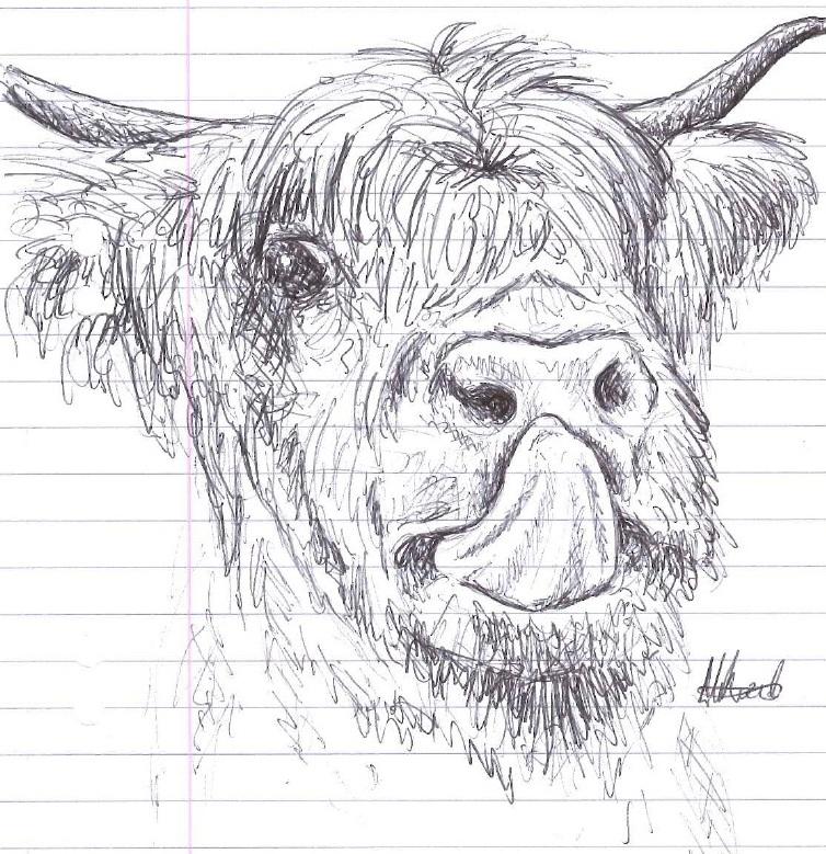 Highland Cow by HaanaArt
