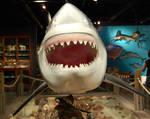 Mounted Shark