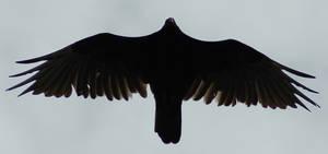 Vulture Silhouette 3