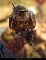 Eagle Owl 1 by SalsolaStock