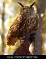 Eurasion Eagle Owl 2 by SalsolaStock