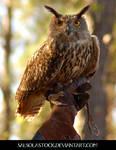 Eurasion Eagle Owl 2