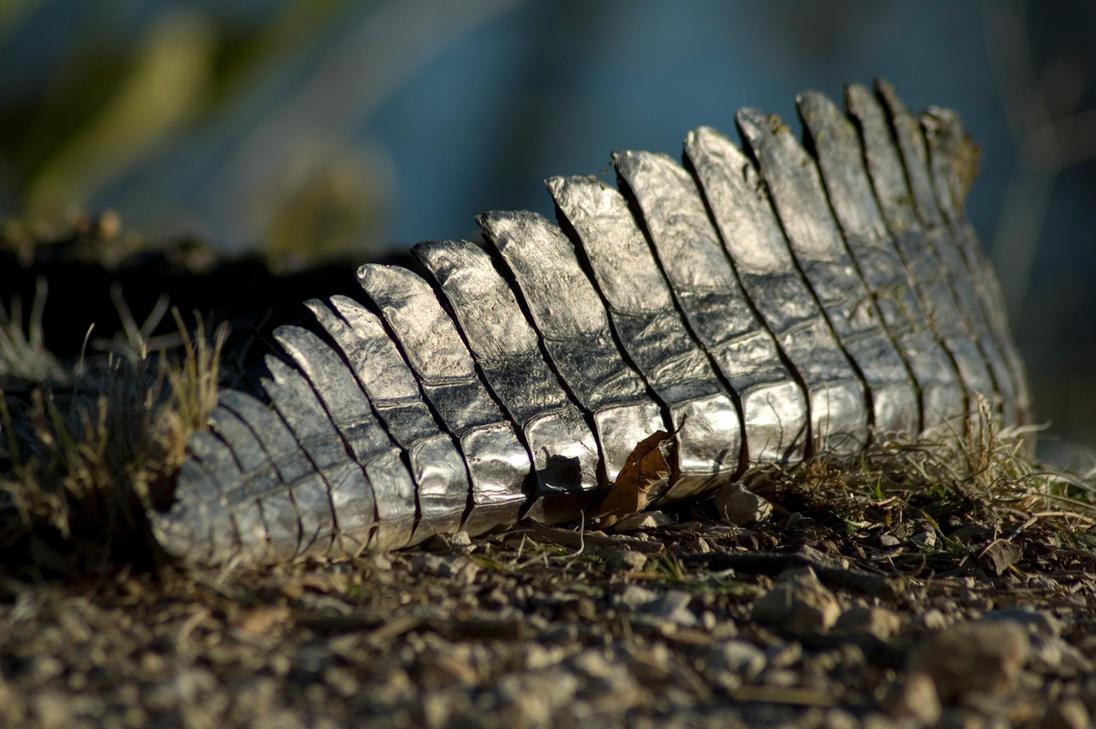 Crocodile tail - photo#7