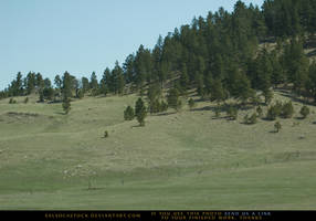 Pine Hills 1 by SalsolaStock
