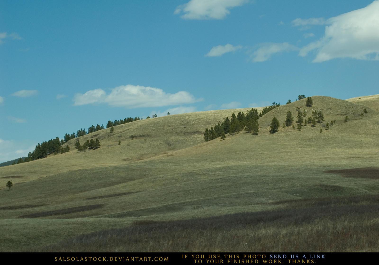 Pine Hills 2
