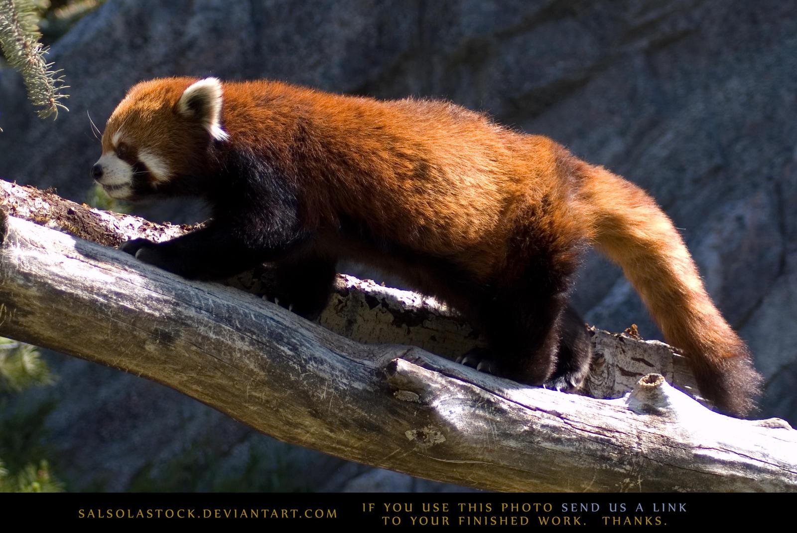 Firefox 3 by SalsolaStock