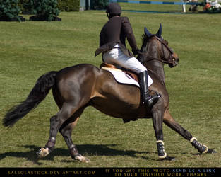 Show Jumper Turn by SalsolaStock