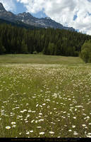 Mountain Meadow 5 by SalsolaStock