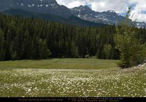 Mountain Meadow 4 by SalsolaStock