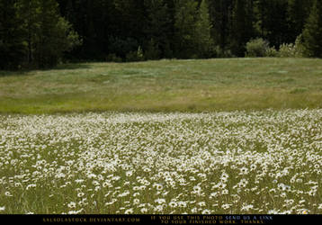 Mountain Meadow 3 by SalsolaStock