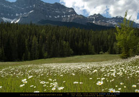 Mountain Meadow 2 by SalsolaStock