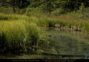 Streamside 9 by SalsolaStock