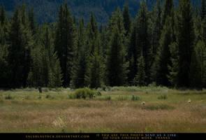 Meadow's Edge 2 by SalsolaStock
