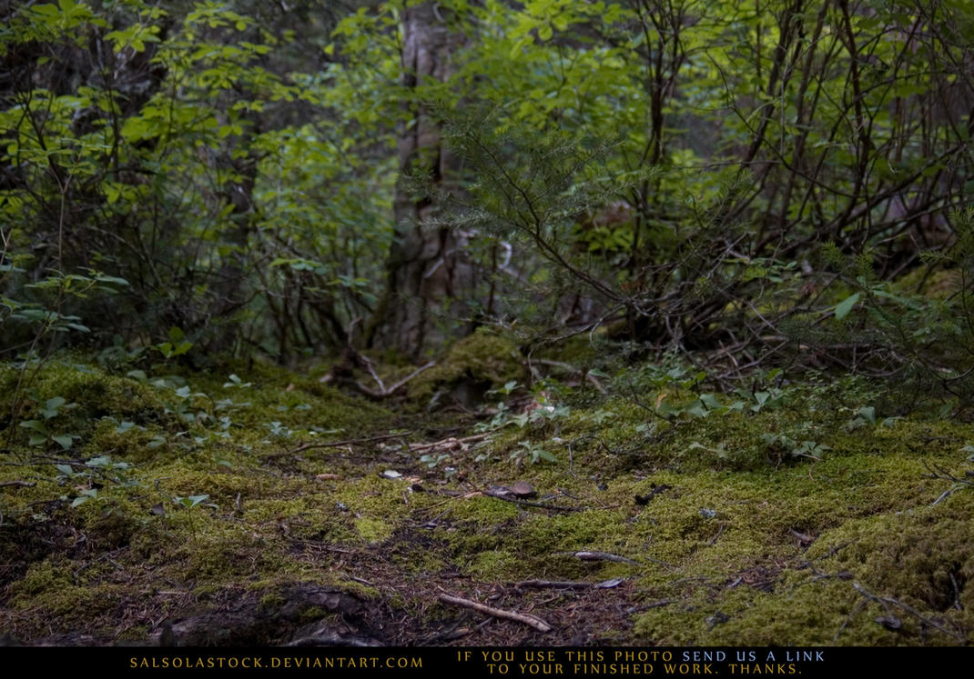 Woodland Floor by SalsolaStock