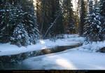 Snow Scene 7