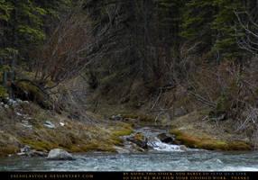 Feeder Stream by SalsolaStock