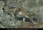Snow Leopard 8