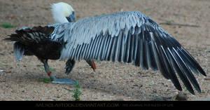 Pelican Wingstretch 3
