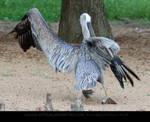 Pelican Wingstretch 6
