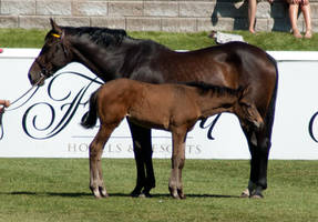Hannoverian Mare and Foal by SalsolaStock