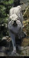 Gray Wolf 8