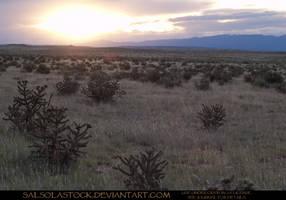 Desert Sunset by SalsolaStock