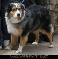 Dog 1 by SalsolaStock