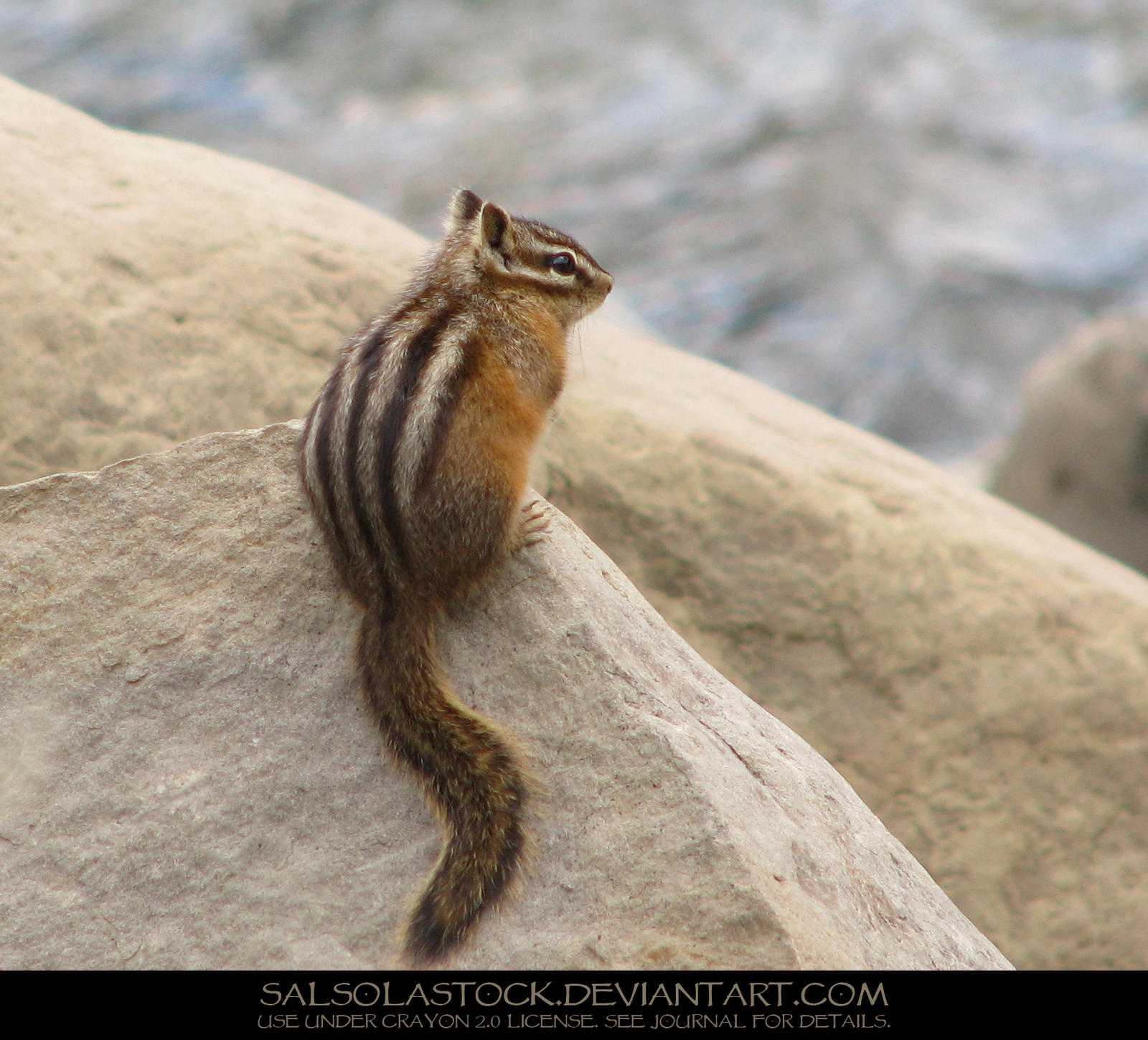 Yellow Pine Chipmunk 1 by SalsolaStock