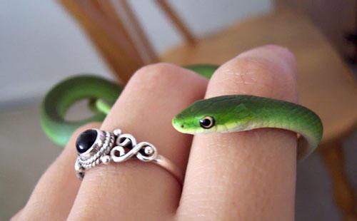 Da o nota pozei Gardener_snake__by_vanillacheeno