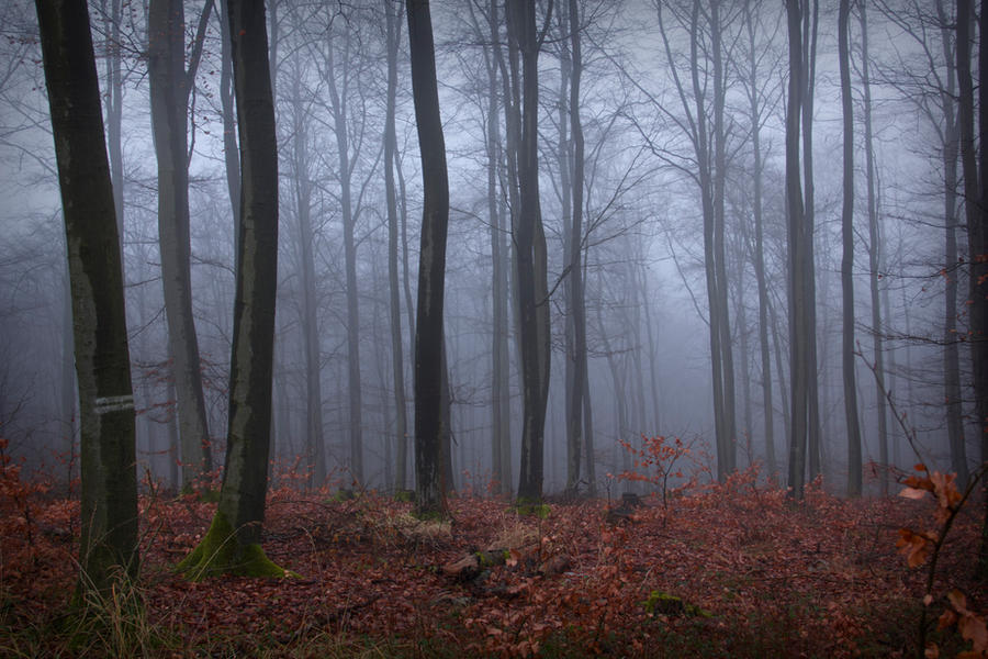 foggy forest by a - photo #4