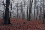 Foggy Forest 07