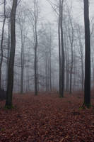 Foggy Forest 04 by sacral-stock