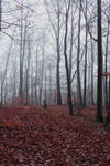 Foggy Forest 03