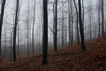 Foggy Forest 20 by sacral-stock