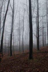 Foggy Forest 19 by sacral-stock