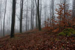 Foggy Forest 18