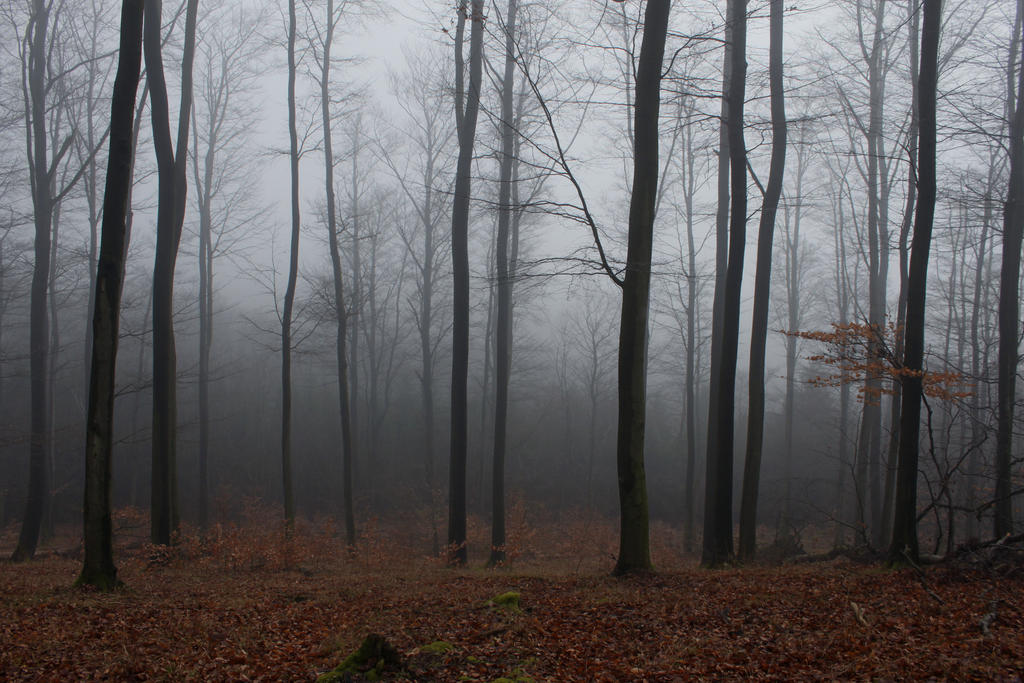 Foggy Forest 13